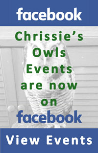 Chrissies Owls Events